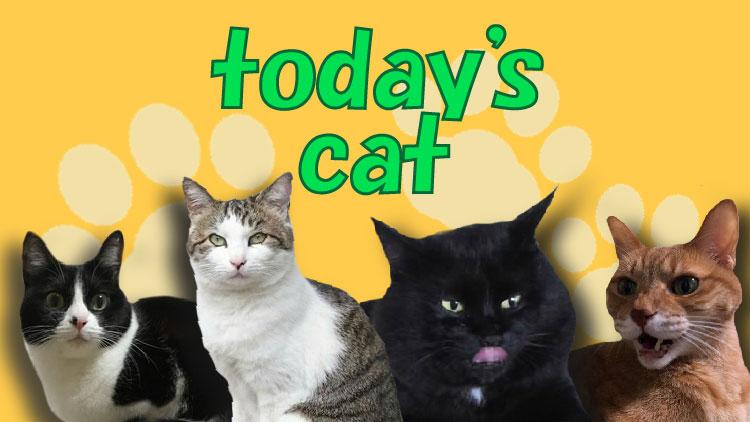 CAT_top-01